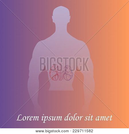 Silhouette Of A Man Torso With Hand Drawn Kidneys. Gradient Background. Space For Text. Human Anatom