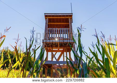 Observation Tower In The Middle Of A Cornfield. Watchtower On The Farm