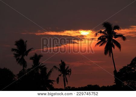 Silhouette Of Sugar Palm Trees In Countryside Of Myanmar During Sunset