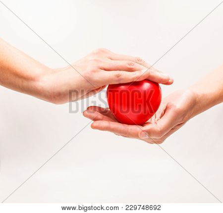 Heart Shape In The Helping Hands On White Background. Heart Illness, Disease Protection, Proactive C