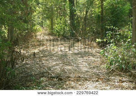 Nature Walkway In Country Nakhon Nayok At Thailand