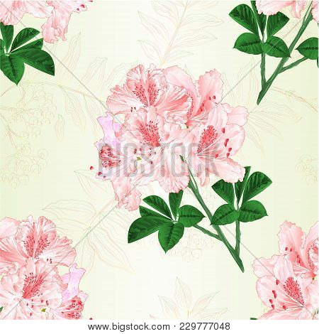 Seamless Texture Flowers Light Pink Rhododendrons Twig Mountain Shrub Vintage Vector Illustration Ed
