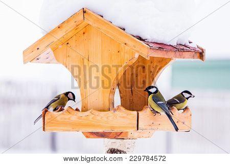 Bird Feeder With Great Tit (parus Major) In Winter