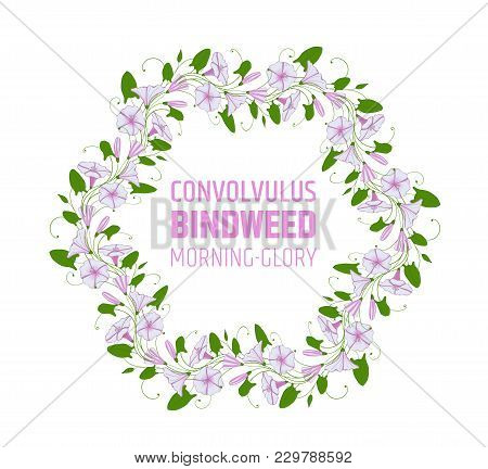 Garland With Pink And White Bindweed Flowers. Wedding Element For Design Wreath Morning-glory. Convo