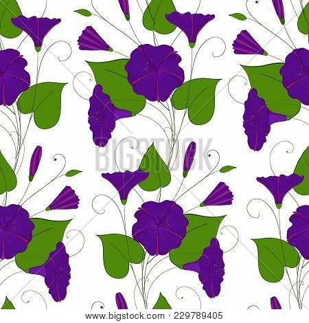 Floral Elegant Background Blue Convolvulus. Seamless Tender Pattern Flower Bindweed. Morning-glory E