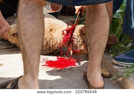 Men With Knife Sacrifices A Lamb Spiling The Animal´s Blood Over The Floor Due To The Celebration Of