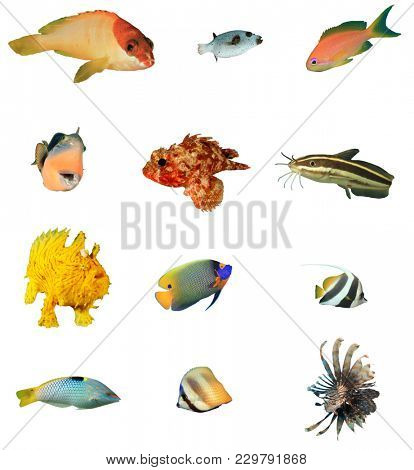 Collection of fish isolated on white background. Reef fish  cutouts