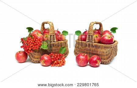 Ripe Apples And Berries Of A Viburnum On A White Background. Horizontal Photo.