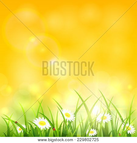 Spring Or Summer Yellow Natural Background. Sunny Day With Flowers And Grass, Illustration.