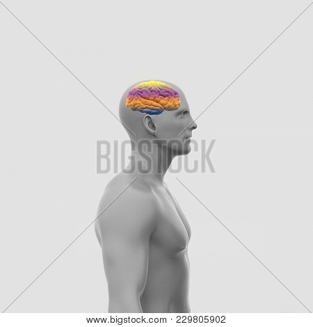 One Man, Naked To The Waist, Stands Sideways With A Large Color Brain. Minimalistic Art. Abstract Re