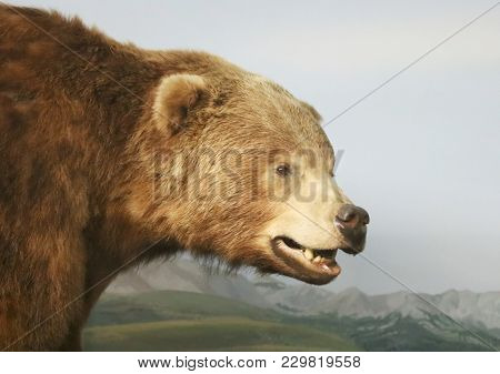 A Portrait Of A Grizzly Bear Head