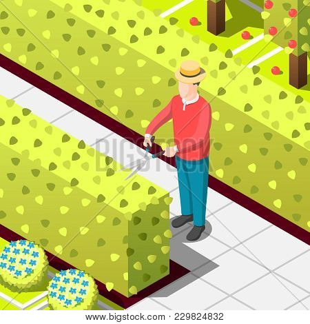 Gardener, Employed Worker With Secateur During Trimming Of Hedges, Isometric Background With Bushes