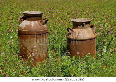 Two Different Sized Rusty Cream Cans Displayed In A Field Of Purple Blooming Clover