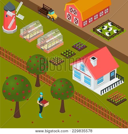 Isometric Farm House Mill Sheepfold And Farmer Gathering Apples Colorful Background 3d Vector Illust