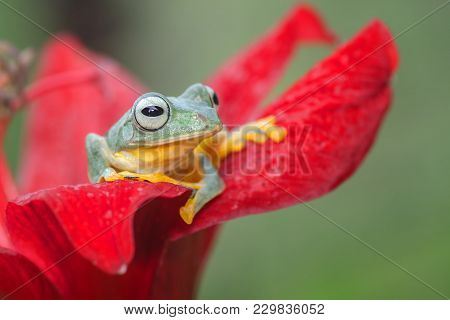 Green Tree Frog At The Top Of Red Flower