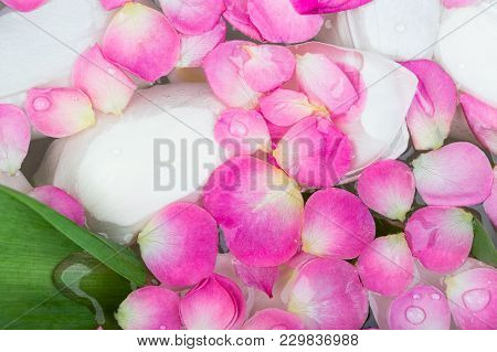 Botany, Spa, Treatment Concept. There Are Green Leaves And Snowy White Petals Of Tulips Under Water,