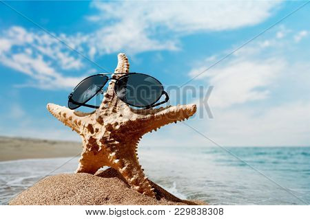 One Star Fish Sand Starfish Color Image
