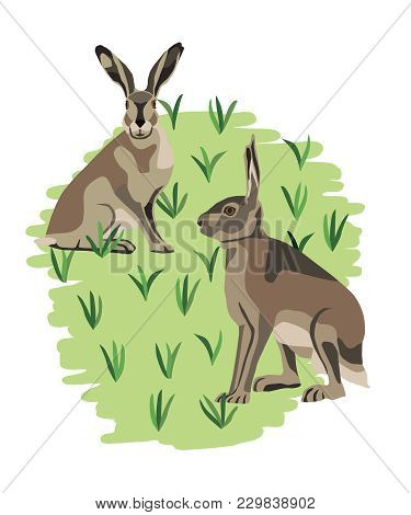 Two Jackrabbit Hares Sitting On A Grass Patch