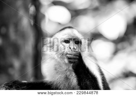 Primate In Jungle On Sunny Day. Wild Animal On Blurred Natural Background. Wildlife And Nature Conce
