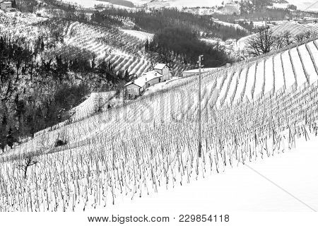 Winter View Of The Vineyards, Covered By The Snow, In The Hilly Region Of Langhe (in The Southern Ar