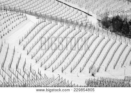 Geometrical View Of The Snowy Vineyards Of The Hilly Region Of Langhe (in The Southern Area Of Piemo