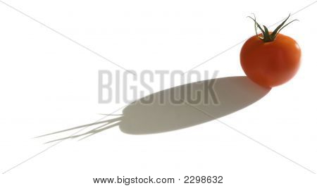 Isolated Tomato In Bright Sunlight