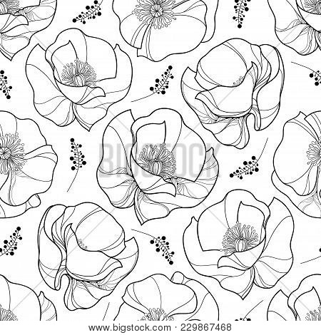 Vector Seamless Pattern With Outline Poppy Flower In Black On The White Background. Elegance Floral