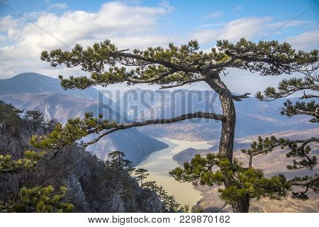 Viewpoint Banjska Stena In Mountain Tara, Western Serbia .canyon Of Drina River In Serbia- The Third