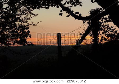 A Tree And Wire Fence With Fence Post Silhouetted Against The Evening Sky