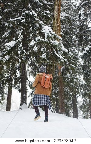Rear view of young tripper with backpacker walking in snowdrift among firtrees covered with snow on winter day