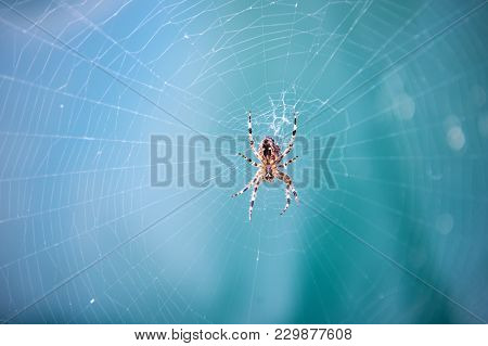 Spider Spinning Web In Nature On Blurred Blue Background. Arachnid, Insect, Animal. Web Construction