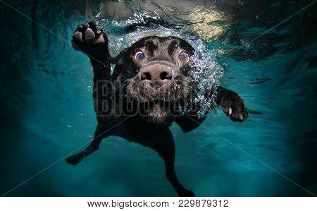 Cute Dog Swim In The Swimming Pool