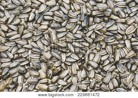 Sunflower Seeds In Bulk, Sunflower Oil Concept, Halva Traditional