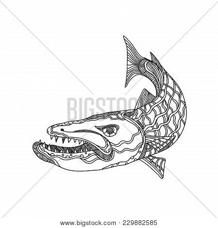 Doodle Art Illustration Of Barracuda, A Saltwater Ray-finned Fish Of The Genus Sphyraena Known For I