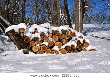 A Pile Of Freshly Cut  Stacked Logs Are Covered With A Layer Of Fresh Snow