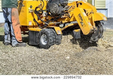 Somerset, Massachusetts, USA - April 1, 2015: Worker uses stump grinder to wear stump down below ground level with fast spinning blade