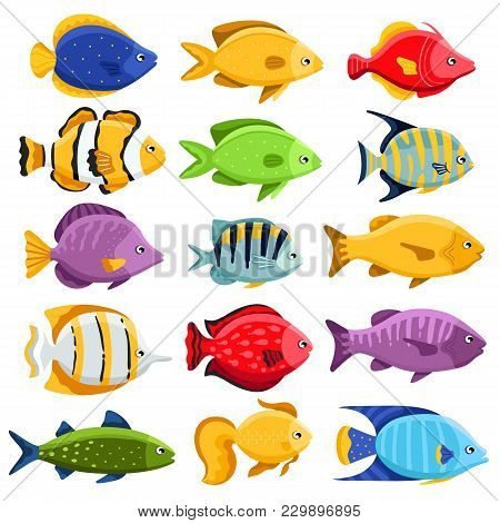 Colorful Coral Reef Tropical Fish Set Illustration. Sea Fish Collection Isolated On White Background