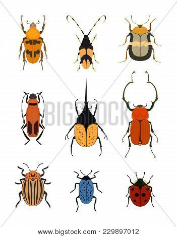 Bug Icon Set Isolated On White Background Illustration. Ladybird, Weevil, Cockchafer, Cockroach, Col