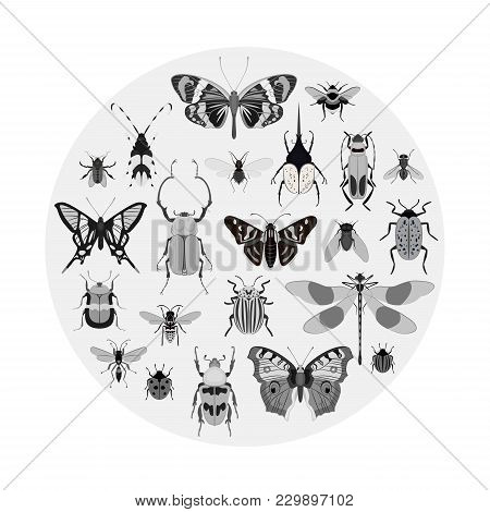 Monochrome Butterfly And Bug Collection Isolated On White Background Illustration. Butterfly, Ladybu