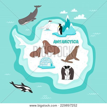 Antarctic Continent Map With Wildlife Animals Illustration. Dolphin, Sperm Whale, Emperor Penguin, S