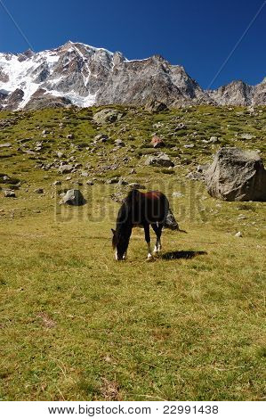 Grazing horse at mountain