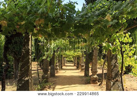 Vila Real, Portugal - September 22, 2017: Grape Trellis Supported By Granite Stone Columns In The Ga