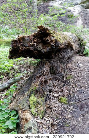 A Downed Tree Decomposing In A Forest