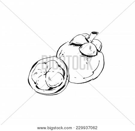 Hand Drawn Vector Abstract Ink Drawing Graphic Sketch Illustration Icon With Tropical Exotic Mangost