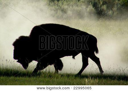 Lone Buffalo Silhouette