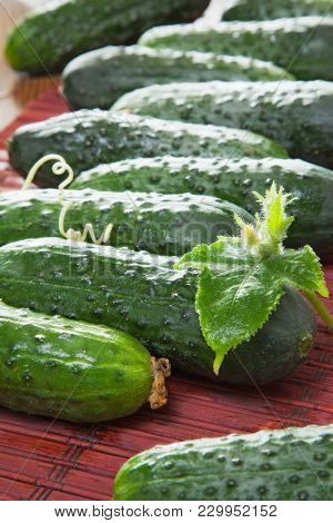 beautiful still life with cucumbers on the table. background