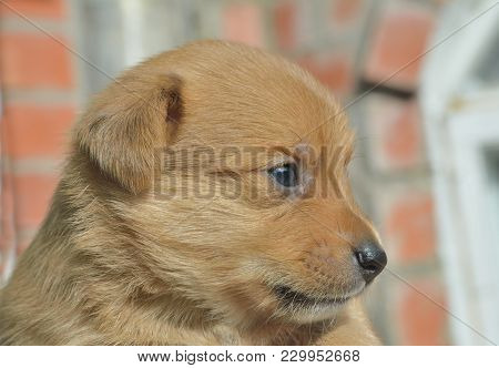 A Close Up Of The Small Puppy.