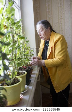 Elderly Woman In The Yellow Jacket At The Window With Flowers, Active Ageing