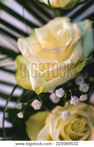 White Roses Background. A Rose Is An Unmistakable Expression Of Love. Roses Convey Deep Emotions - B