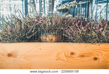 Dryed Common Heather Ling Scotch Heather Calluna Vulgaris In Wooden Box On The Street In Winter.